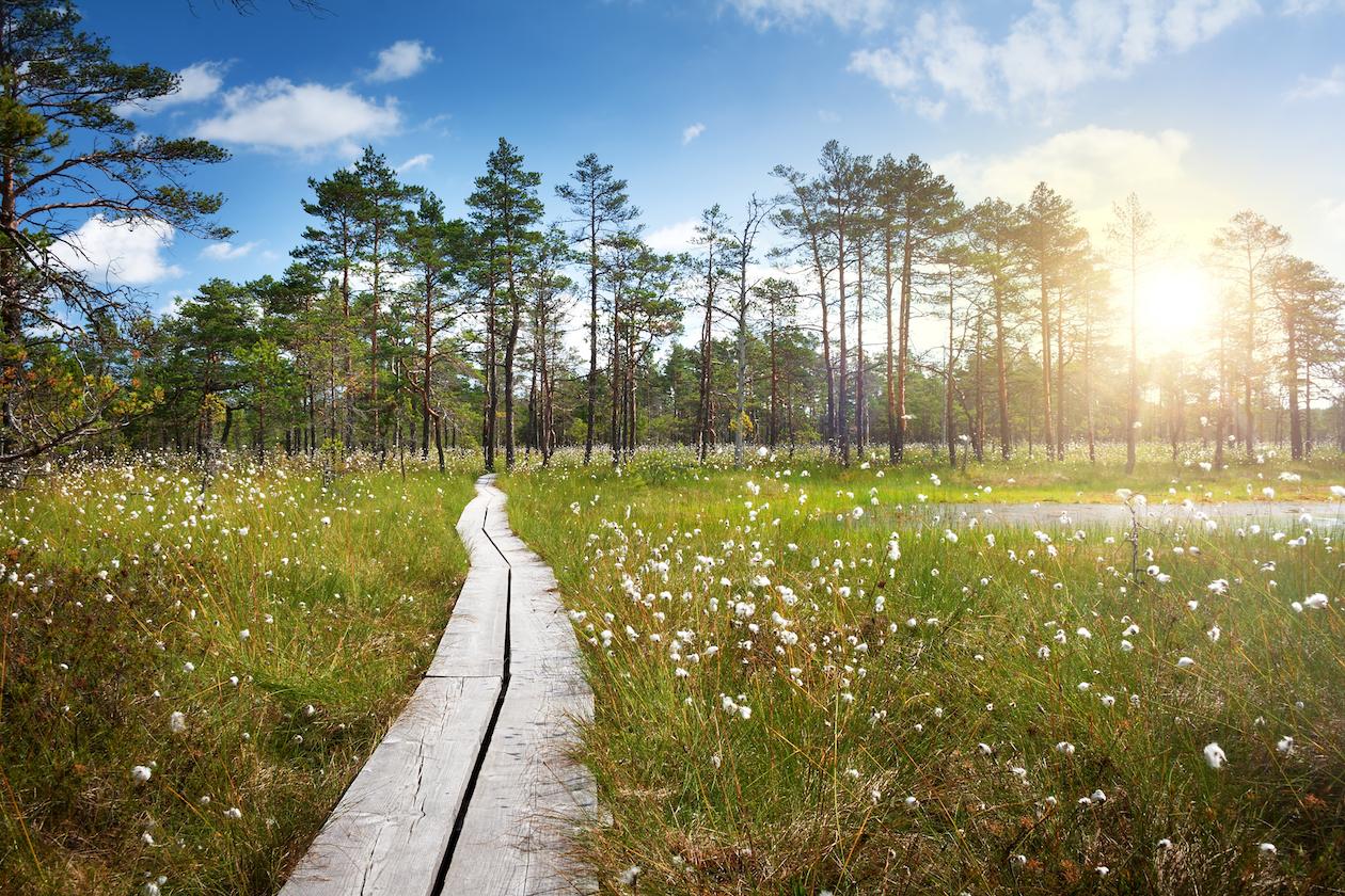 """Lahemaa rahvuspark - """"rõõmu rada"""""""